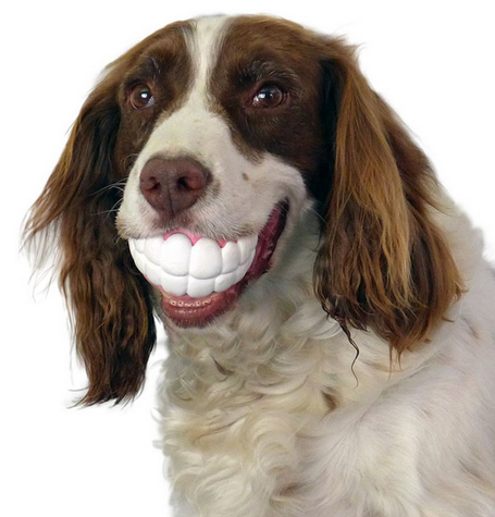 Dog toys that will make you laugh