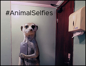 animalselfies