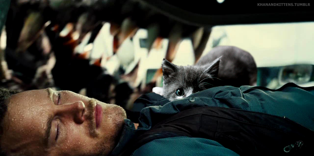 someone-replaced-all-of-the-dinosaurs-in-jurassic-park-with-cats-5