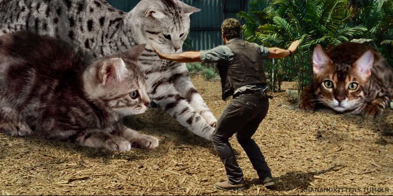 someone-replaced-all-of-the-dinosaurs-in-jurassic-park-with-cats-7