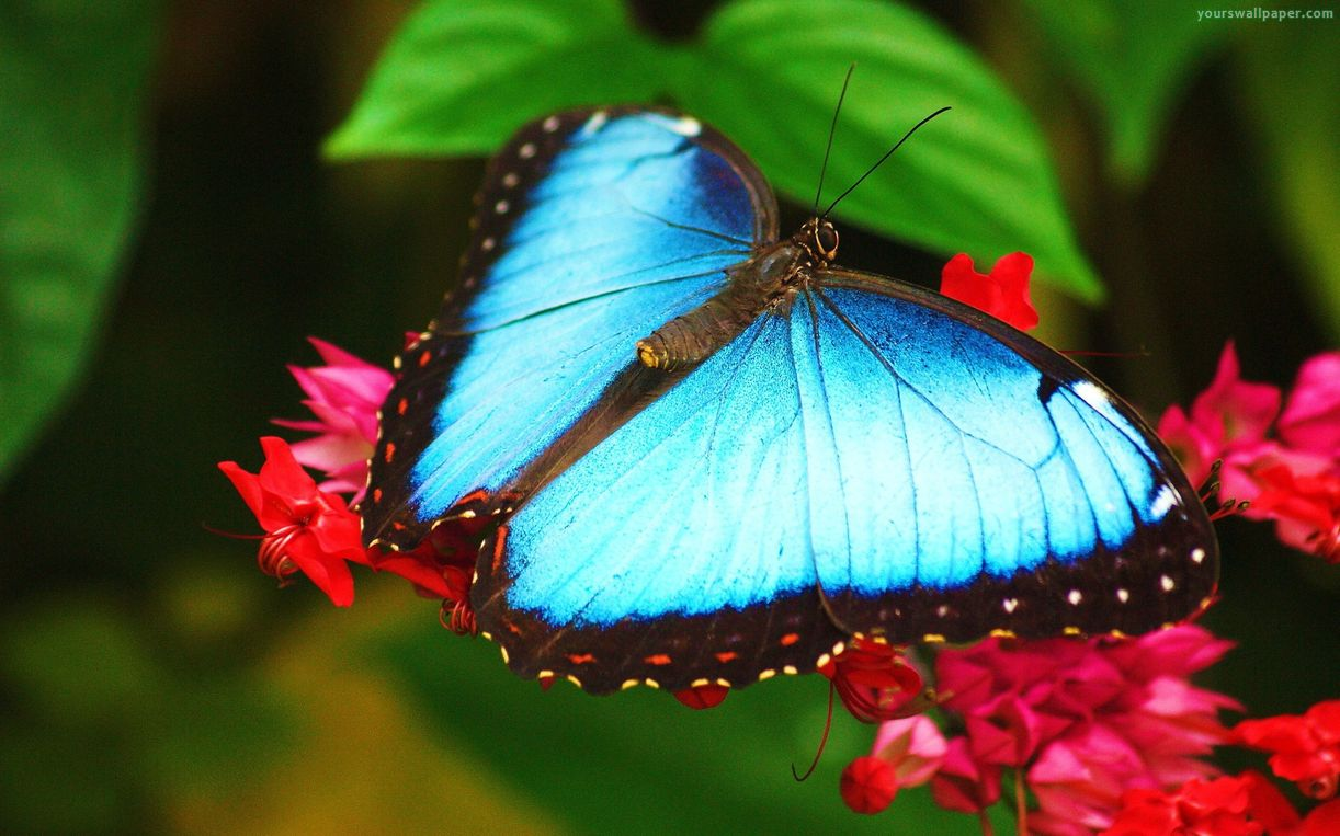 top 10 most beautiful butterflies of the world the allmyfaves