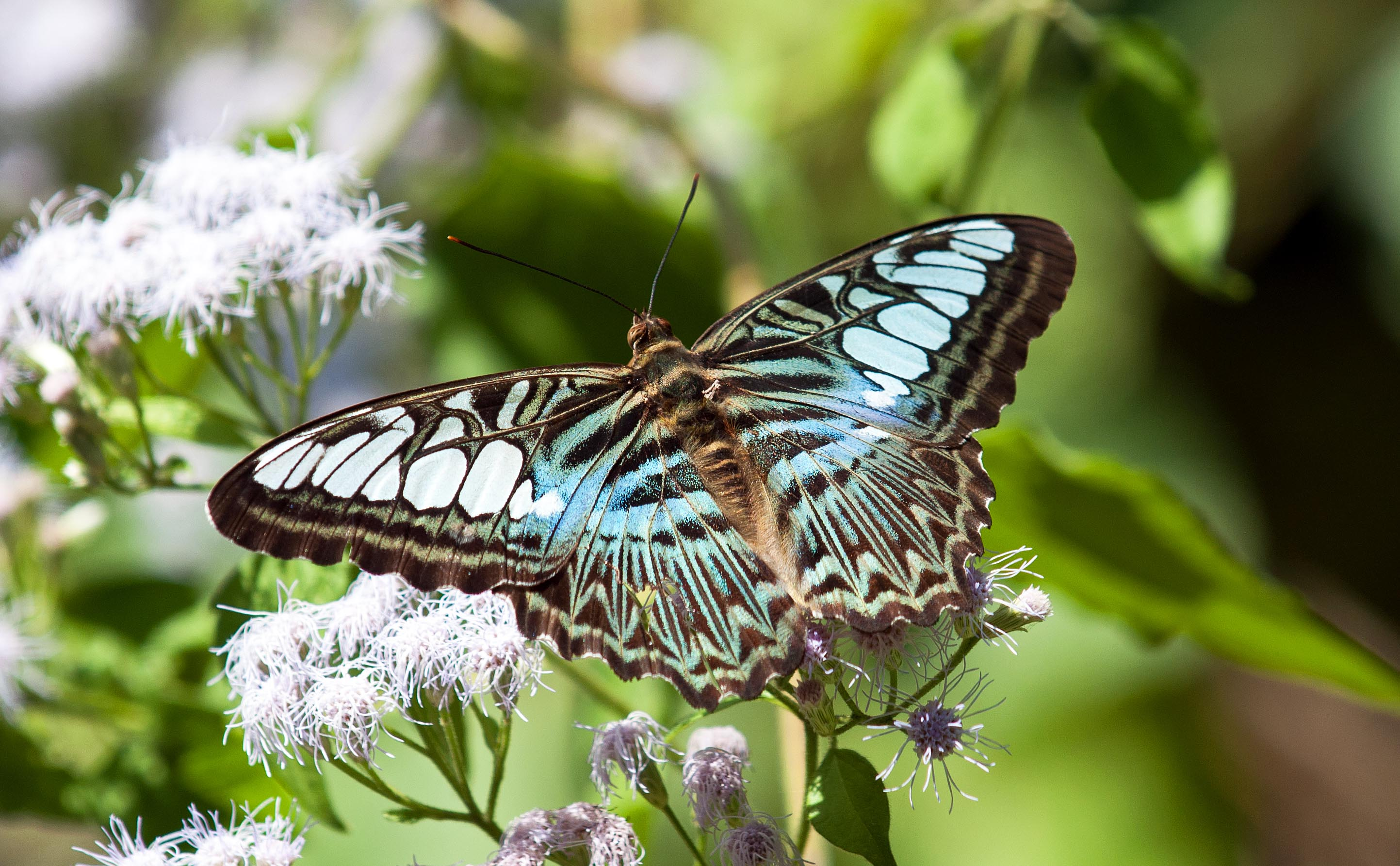 TOP 10 MOST BEAUTIFUL BUTTERFLIES OF THE WORLD 10 Most Beautiful Butterflies