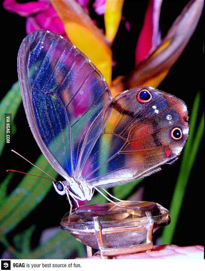 Top 10 Most Beautiful Butterflies of the World « The ...  Top 10 Most Bea...